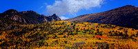 Fall Foliage (Cripple Creek, CO)